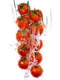tomatos branch in water splashes