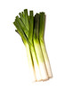 Leeks isolated on a white studio background.