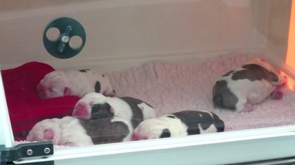 perros nacimiento