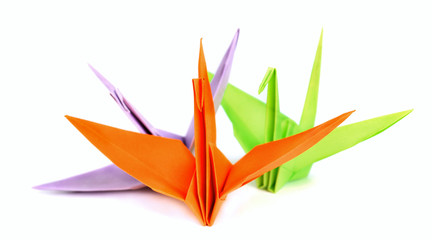 Color origami bird