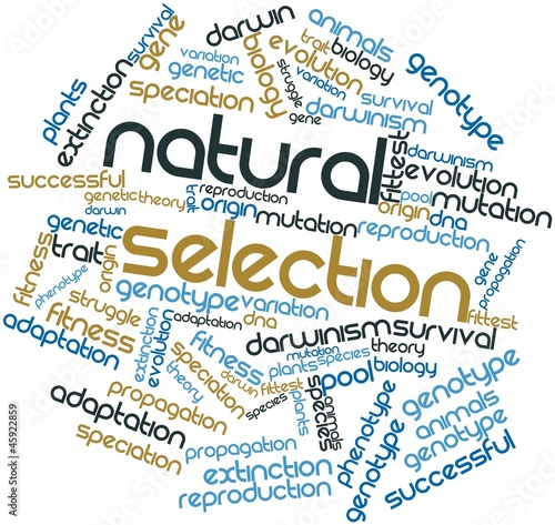 Word cloud for Natural Selection