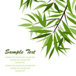 Bamboo background and sun, vector