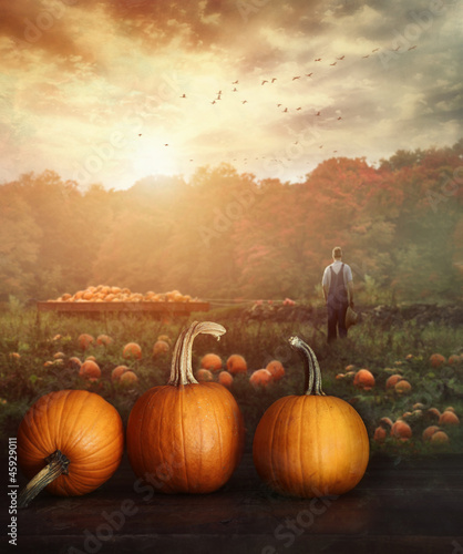 Pumpkins on table in farmer's field