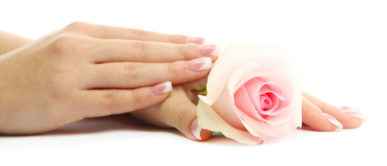 Beautiful woman hands with rose, isolated on white