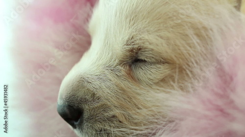 newborn puppy sleeps