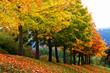 Herbstallee auf der schwäbischen Alb