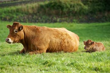 élevage et investissement