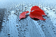Water drops on car paint with autumn leaf
