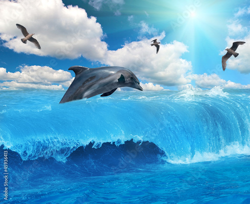 grey dolphin and seagulls