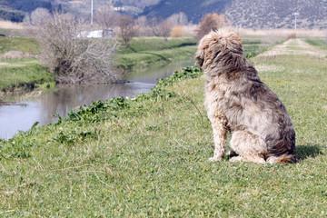 cane sulla sponda del fiume assorto