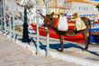 Beautifull donkey posing in Hydra island Saronikos Gulf Greece