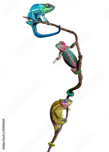Staande foto Kameleon nach oben