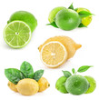 Collection of lemons and limes isolated on white background