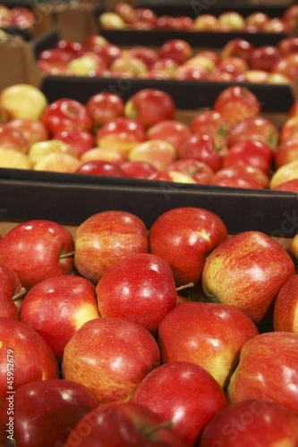 Appetizing red apple  in grocery