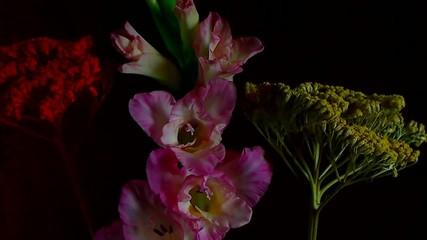 Fioritura di gladiolo rosa
