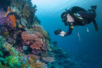 diver with healthy colourful coral