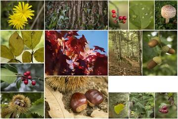 Montage thème automne