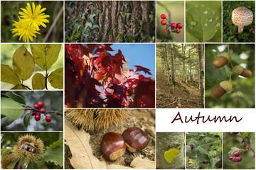 Pêle-mêle automne (anglais)