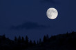 Full Moon over Pine Trees silhouette with midnight blue sky - 45962810
