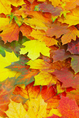 Herbstlicher Blätterteppich