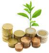 argent et plante