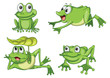 green frogs
