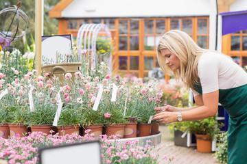 Garden center employee checking flower pots