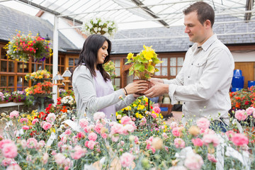 Couple holding up yellow flower