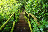 Forest Trail at Beautiful Rain Forest - Doi intanon, Thailand