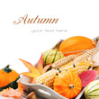 Autumn still-life with pumpkins and corn