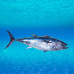 Bluefin tuna Thunnus thynnus underwater