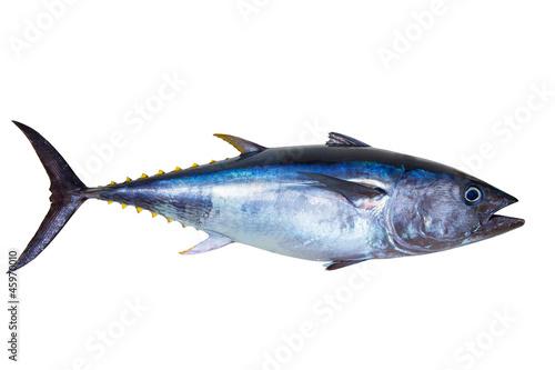 Fototapeta Bluefin tuna really fresh isolated on white