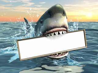 Shark advertising