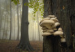 mushrooms on a tree in forest