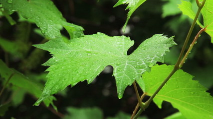 Rain droplets on leaf 3