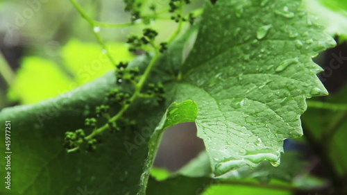 Rain droplets on leaf 2