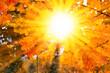 Herbstsonne im Ahornbaum