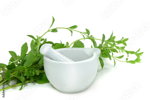 Stevia 5