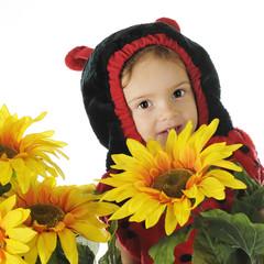 Hiding among the Sunflowers