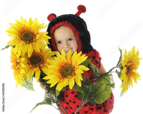 Peek-a-Boo Ladybug