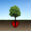 Tree and root of red heart