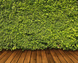 Green leaves wall and wood floor for background