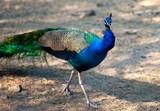 Fototapeta zielony - park - Ptak