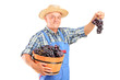 A vintner holding a basket full of blue wine grapes