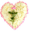 Excellent heart of white rose petals surrounded by pink petals