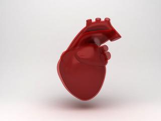 Cuore ventricolo, manuale di anatomia, università, ricerca