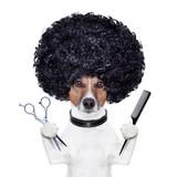 hairdresser  scissors comb dog