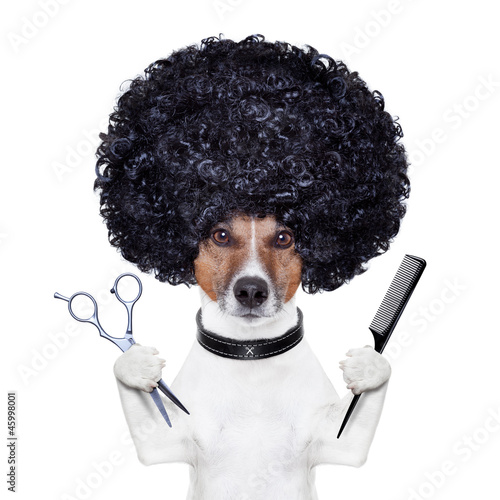 canvas print picture hairdresser  scissors comb dog