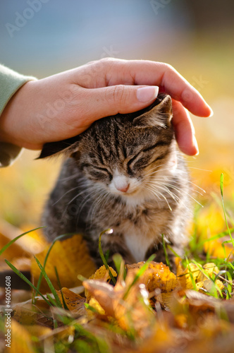 adorable small kitty tender touch