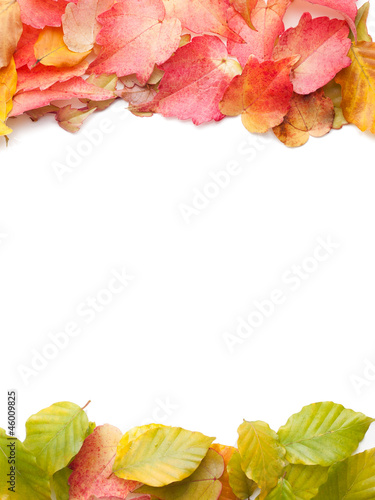 Autumn leaves on top and bottom - isolated